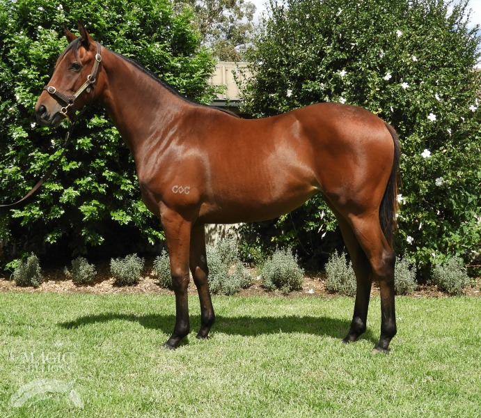 Purroni at 2018 Gold Coast Yearling Sale
