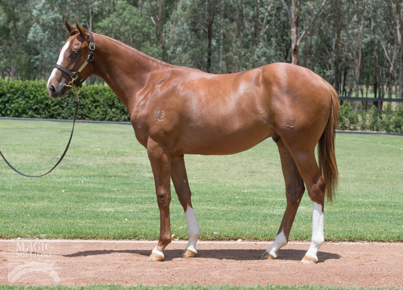 Escaped at 2018 Gold Coast Yearling Sale