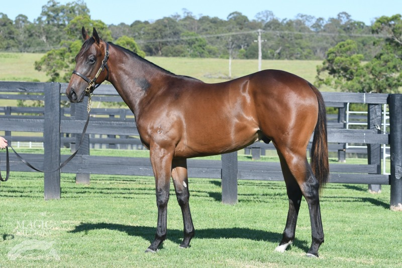 Eleven Eleven at 2018 Gold Coast Yearling Sale