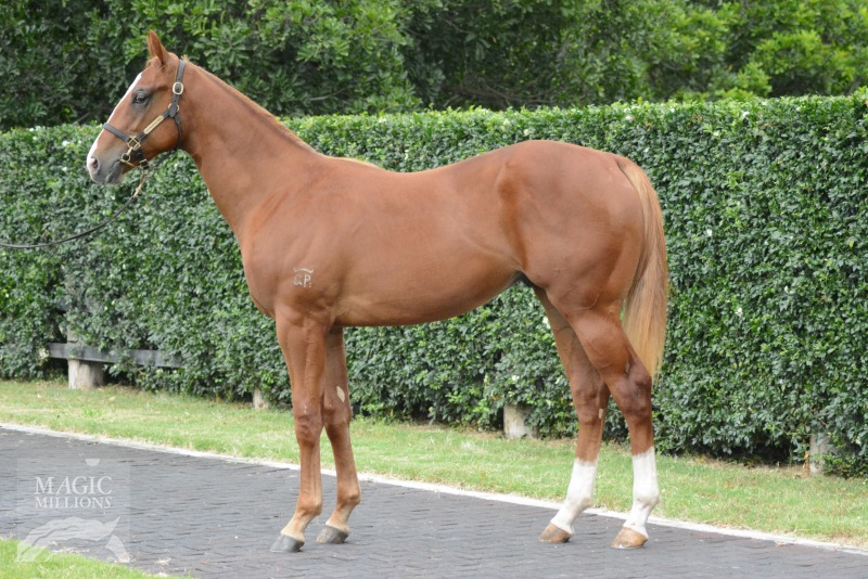 Zouspectre at 2018 Gold Coast Yearling Sale