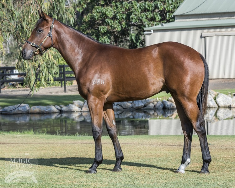 Sir Rocket at 2018 Gold Coast Yearling Sale