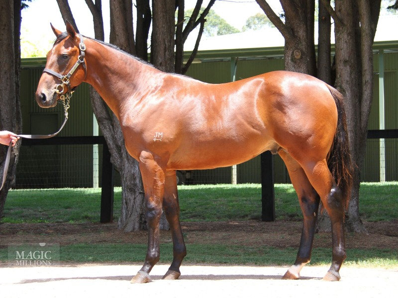 Grand Admiral at 2018 Gold Coast Yearling Sale
