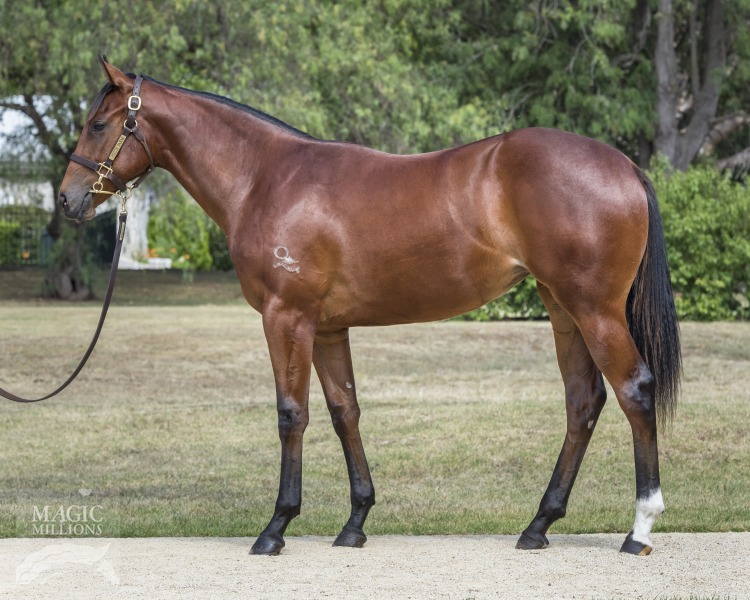 Sizzlefly at 2018 Gold Coast Yearling Sale