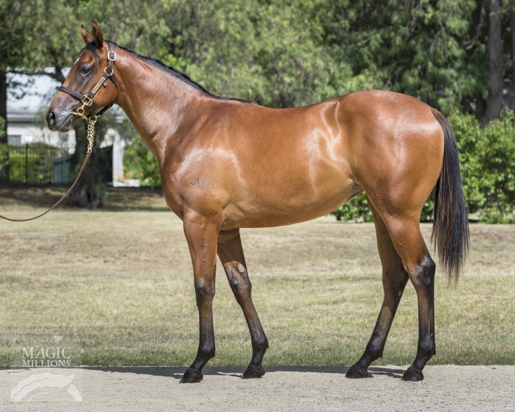 Atomic Pulse at 2018 Gold Coast Yearling Sale