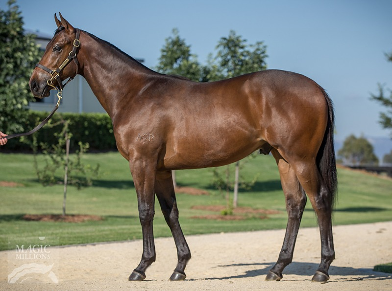 Vici at 2018 Gold Coast Yearling Sale