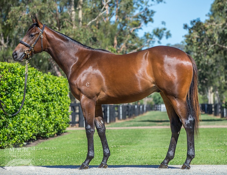 Asateer at 2018 Gold Coast Yearling Sale
