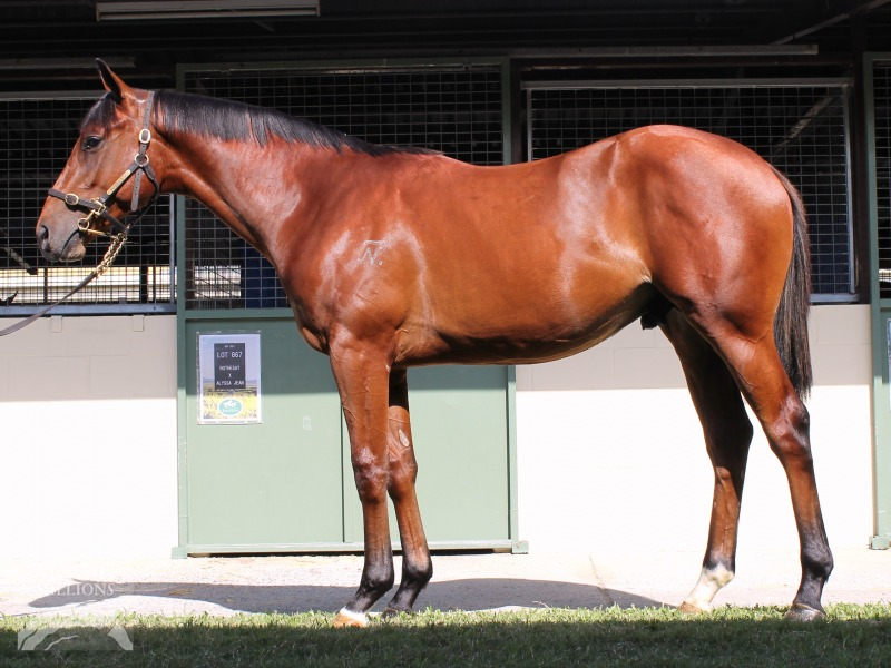 Couldn't Refuse at 2018 Gold Coast Yearling Sale