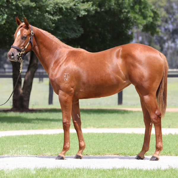 Absolute Flirt at 2018 Gold Coast Yearling Sale